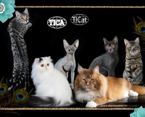 expo felina tica novara gennaio 2019