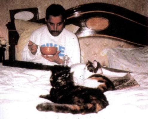 freddie mercury cats