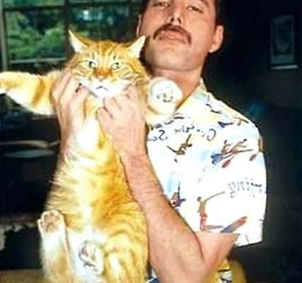freddie mercury gatti 5