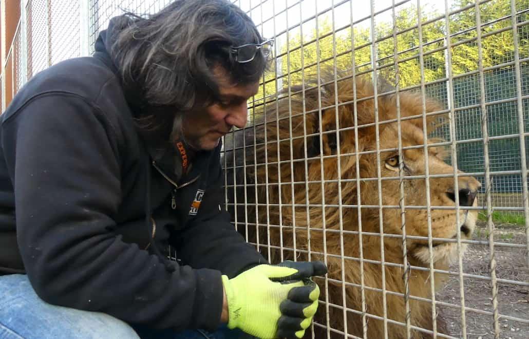 gianni mattiolo tiger experience leone