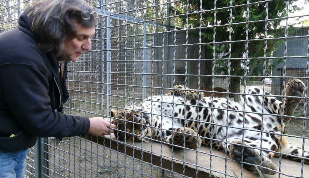 tiger experience gianni mattiolo