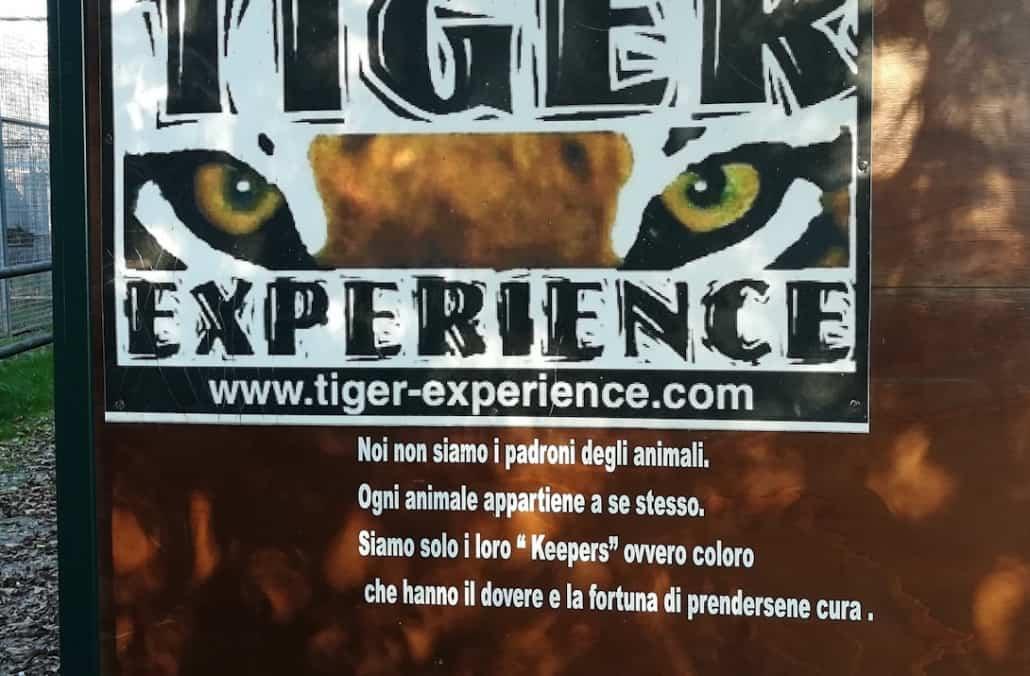 tiger experience parco tigri leoni veneto