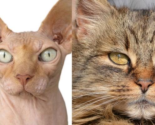 Pelle cute pelo del gatto caratteristiche malattie