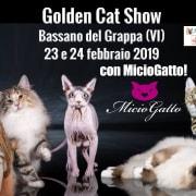 expo felina bassano 2019