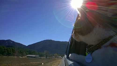 gatta che viaggia