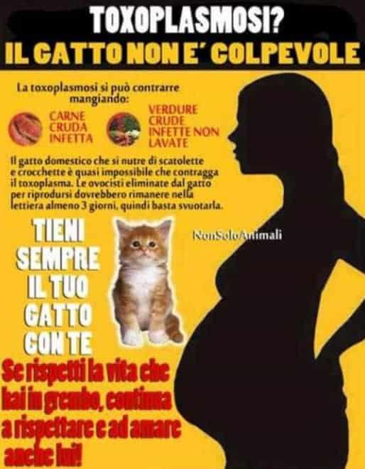 gatto gravidanza umana malattie