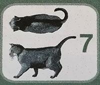 Peso del gatto