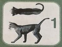 Peso gatto 1