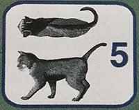 Peso gatto adulto