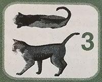 peso ideale gatto 3