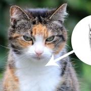 tiroide nel gatto sintomi anatomia problemi
