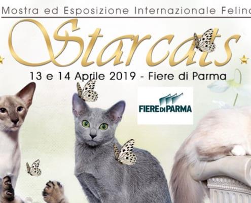 Esposizione felina Anfi di Parma 2019
