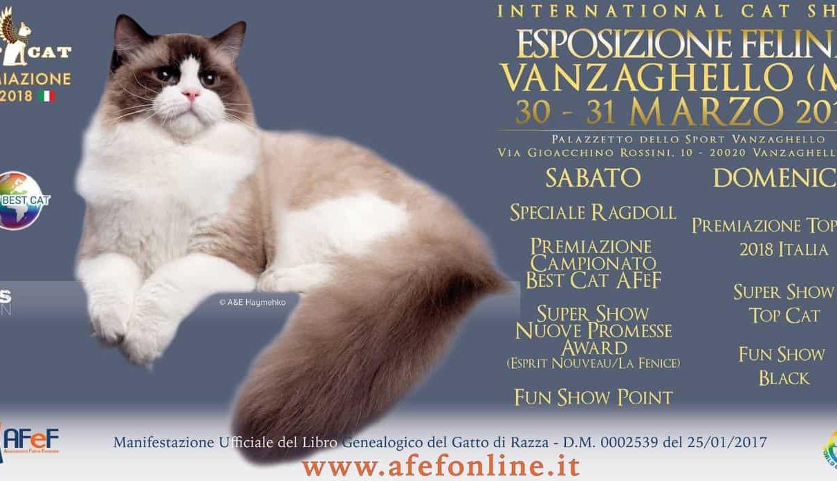 Esposizione felina Vanzaghello 2019 AFEF