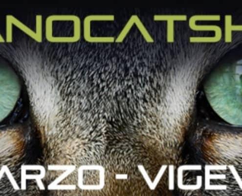 Esposizione felina Vigevano Milano Cat Show 2019