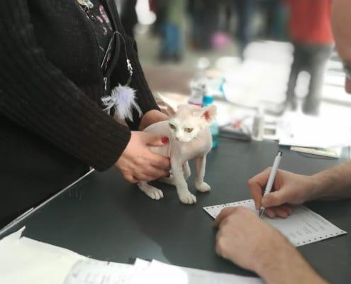 Mostra felina come funziona e come partecipare