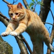 Salti, rotolamenti, arrampicate come fa palestra il gatto
