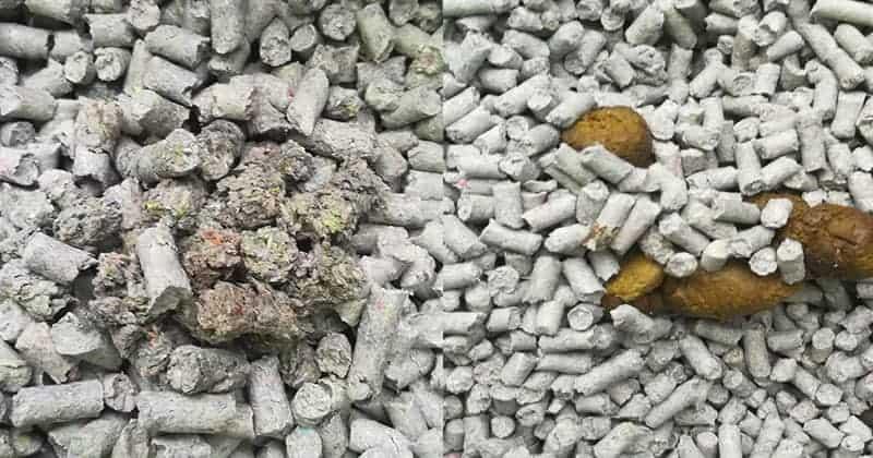 bisognini gatto lettiera in pellet carta riciclata