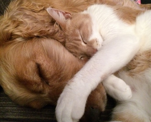 Cani e gatti come fare le presentazioni