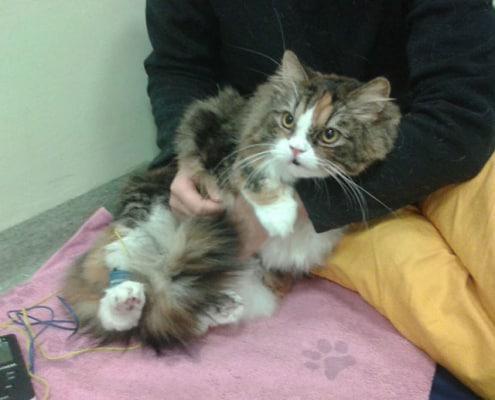 Fisioterapia veterinaria per cani e gatti, come funziona