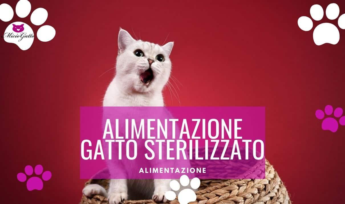consigli alimentazione gatto sterilizzato castrato