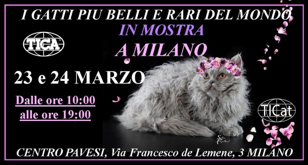 Mostra Felina Internazionale Tica Milano 2019 Miciogattoit
