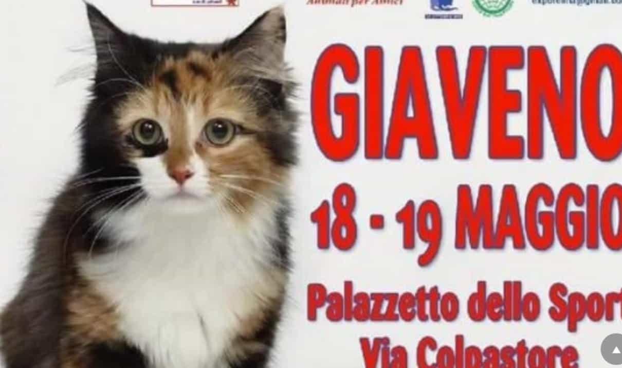 Esposizione Internazionale Felina AFI di Giaveno (TO) 2019