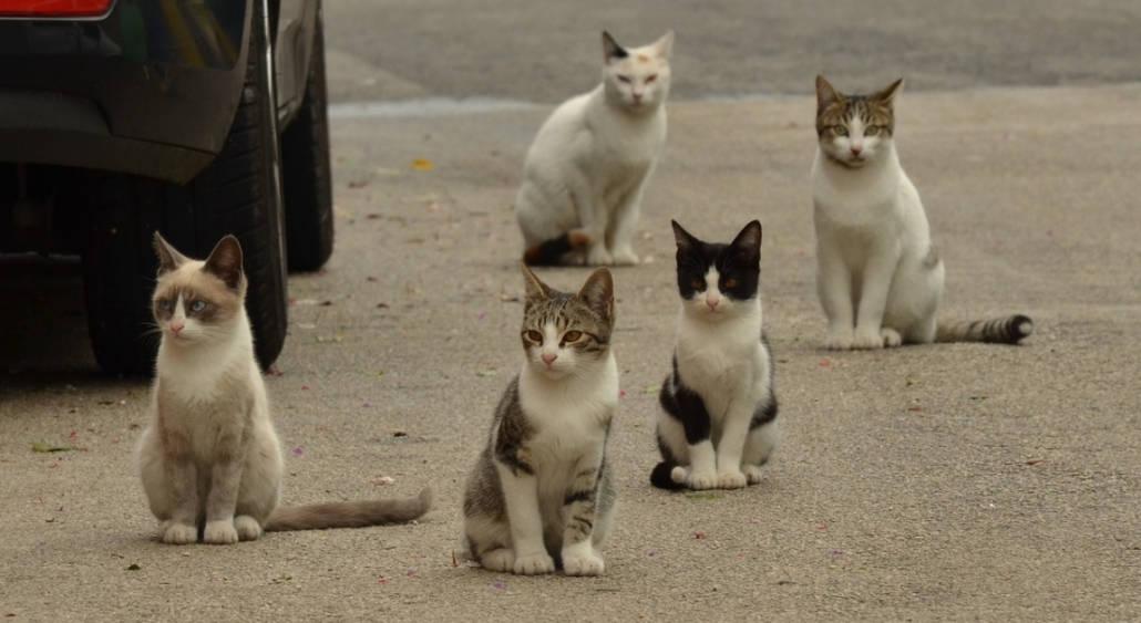 Calendario Eta Gatti.Eta Dei Gatti Come Si Contano Gli Anni Dei Gatti