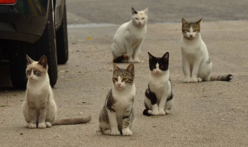 Età dei gatti come si contano gli anni dei gatti