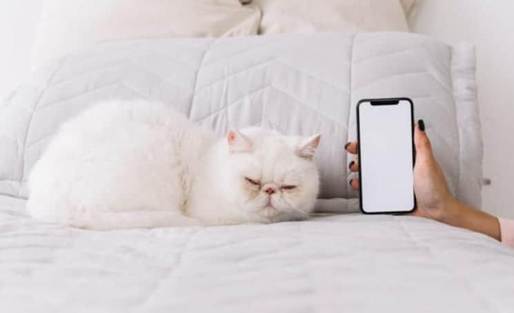 Gatto bianco caratteristiche, significato e razza