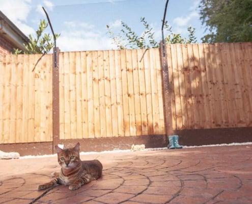 Giardino in sicurezza per gatti come fare