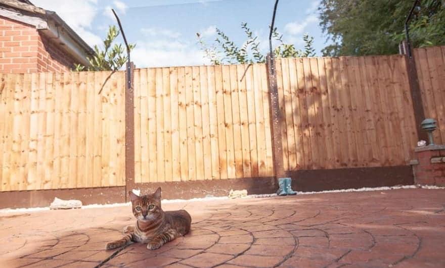 Recinzione Giardino Per Gatti.Giardino In Sicurezza Per Gatti Come Fare Miciogatto It