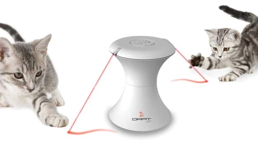 Laser per gatti gioco o dannoso