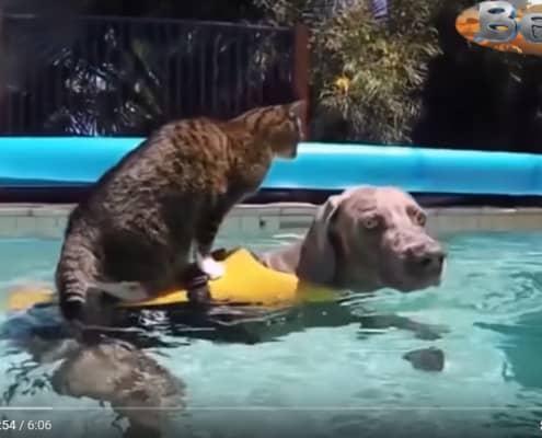 Video buongiorno con gatti per partire alla grande