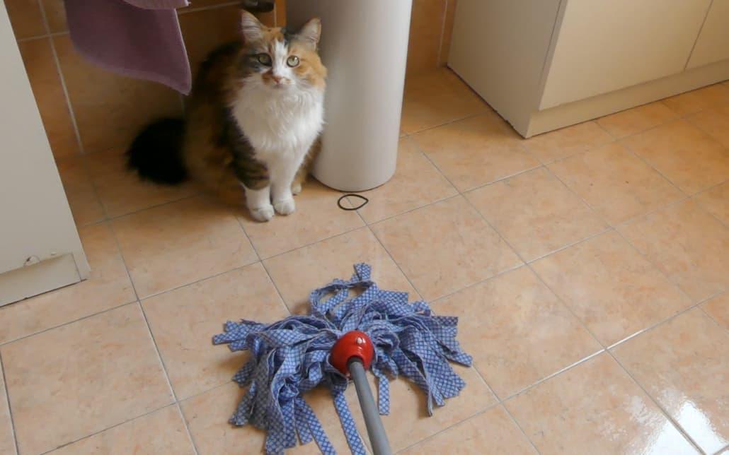 Ylmo pulizia della casa