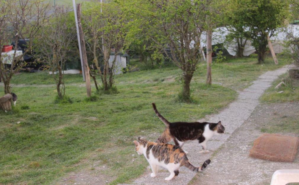 cassiopei gattile siena oasi felina