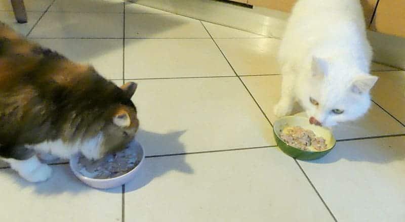cibo fresco per gatti HOM