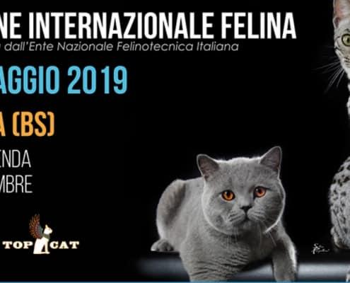 esposizione felina barbariga brescia 2019