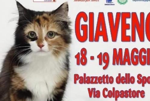 expo felina giaveno 2019
