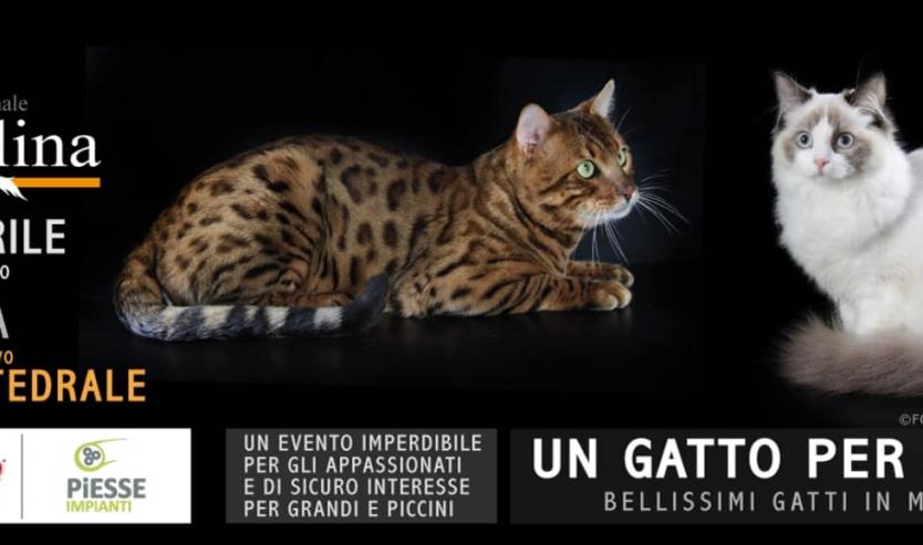expo felina pistoia 2019
