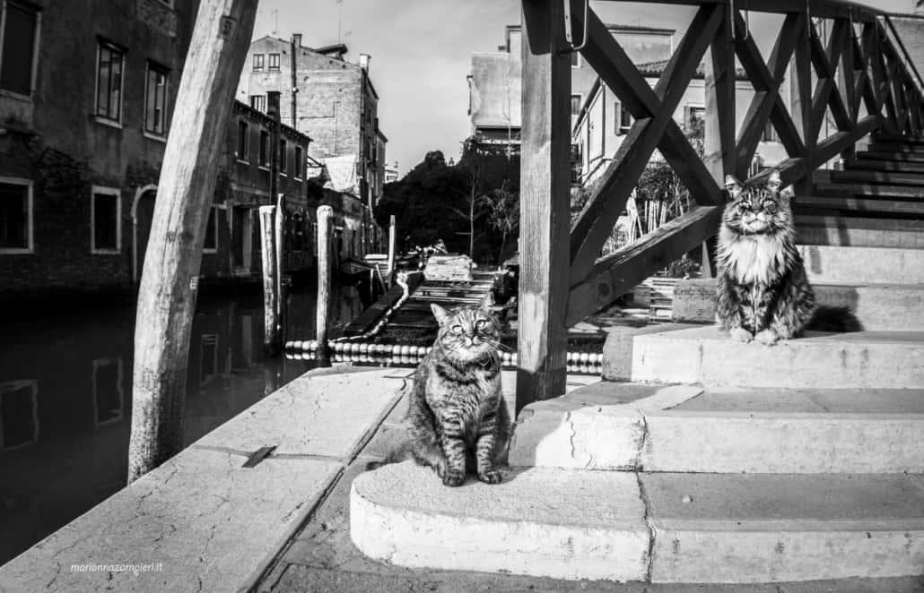 foto di gatti Marianna Zampieri