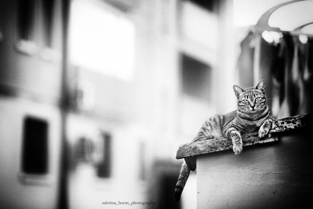 Foto di gatti Sabrina Boem