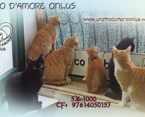 i gatti di teresa gattile ischia