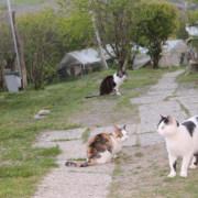siena oasi felina cassiopei