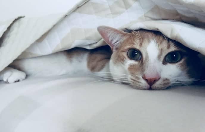 Dormire con il gatto fa bene fa male