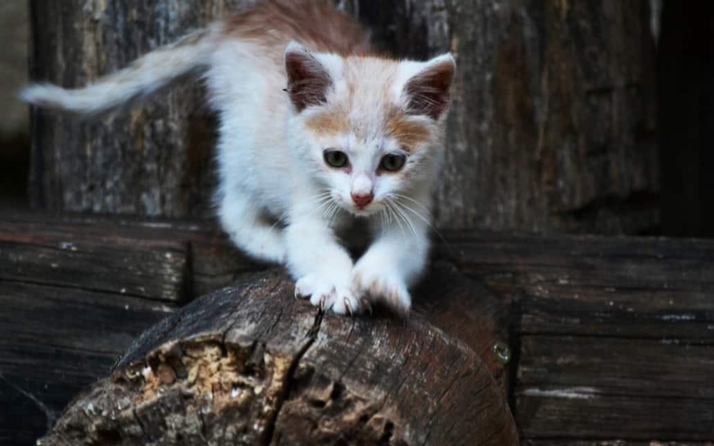 foto di gatti piccoli