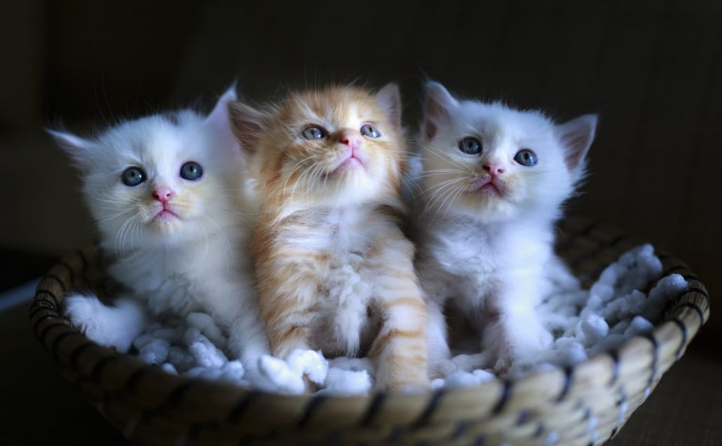 foto di gattini piccolini