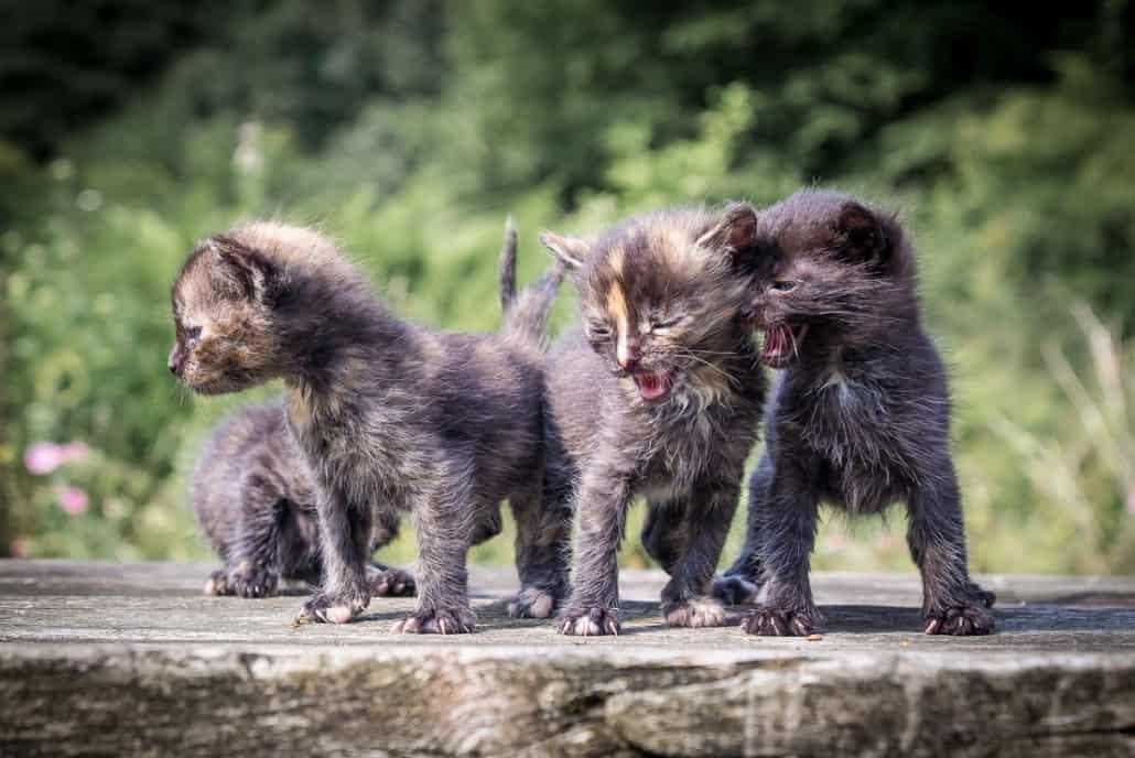 foto gatti cuccioli