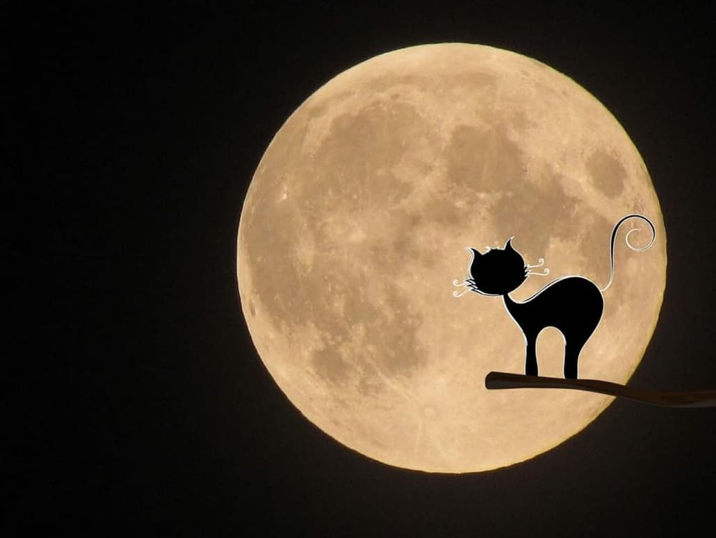 gatti neri halloween