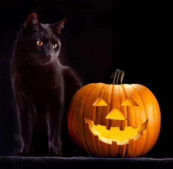 Gatto Halloween