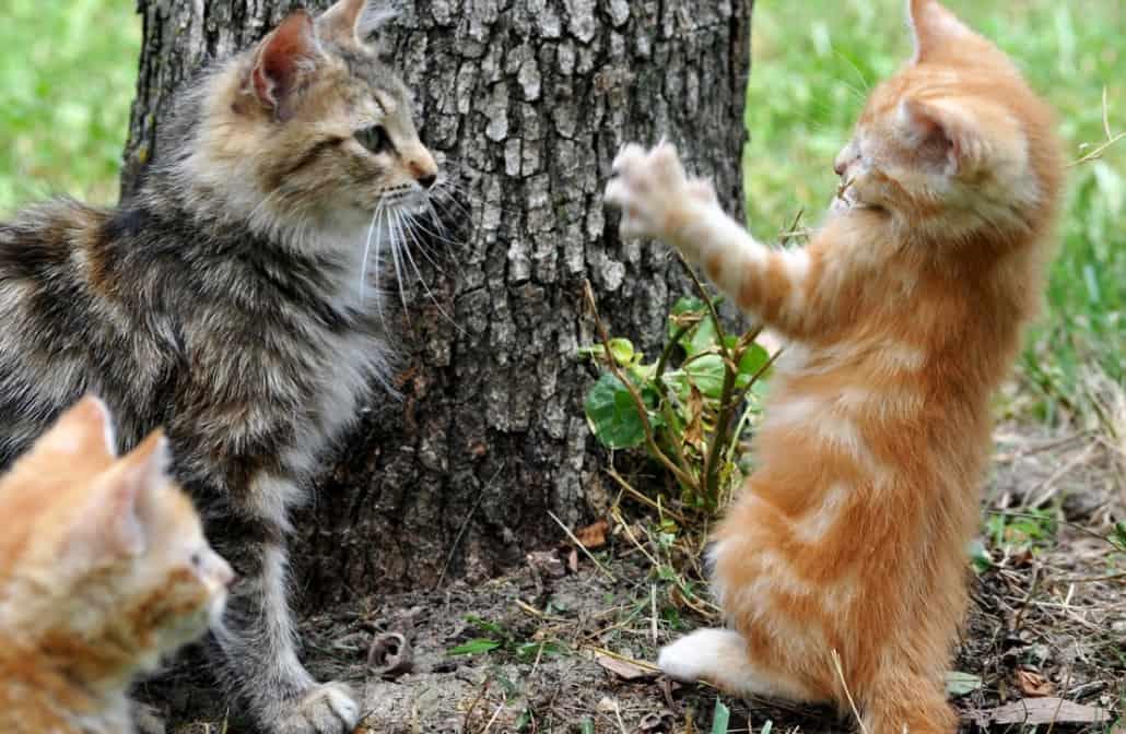 immagini di gattini piccolini